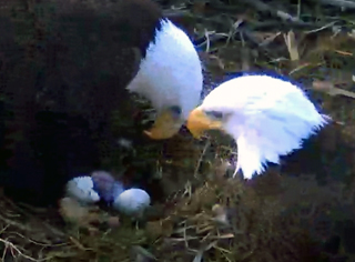 Eagles4Kids First Hatch 2012